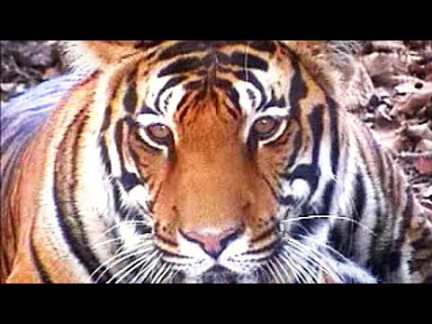 Tourist People Agog  For Tiger seeing  Jeepsy Tour of Kanha National Park