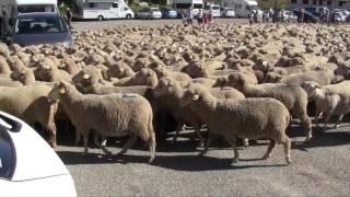 Foire des bergers de Font d'Urle