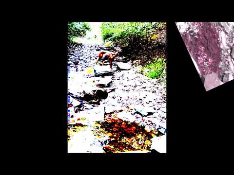 #Deer in the #Brook | Daytime #Trailcam Footage | #Ambient Audio