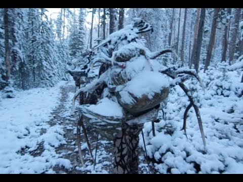 PACKING A BULL 12 MILES ON OUR BACKS!! COLORADO BACKCOUNTRY HUNT DAY - 11
