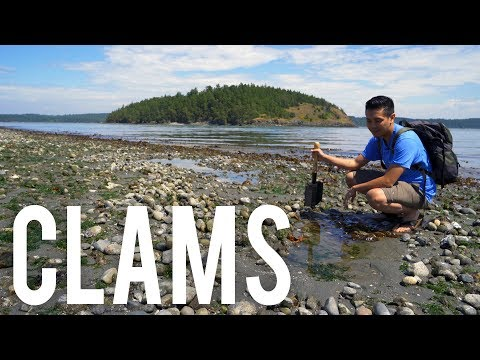 Catch & Cook : Butter Clams in Washington