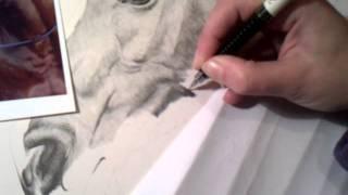 Video of me drawing Arab horse 4/ Vídeo de mí dibujar caballo árabe 4