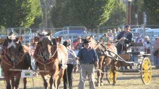 Reportage Sommet de l'élevage 2012 HD