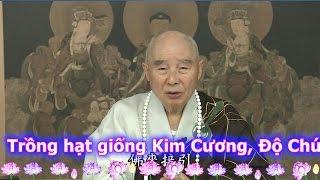 TĐ:127-Trồng hạt giống Kim Cương, Độ Chúng Sinh có Duyên