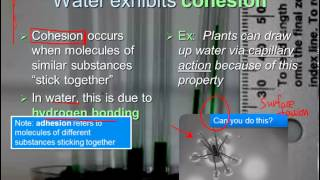 Properties of Water (IB Biology) | Alex Lee