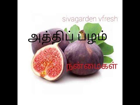 Athi Pazham Fig Fruit Benefits