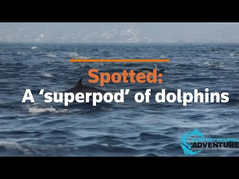 'Superpod' of dolphins spotted off California coast