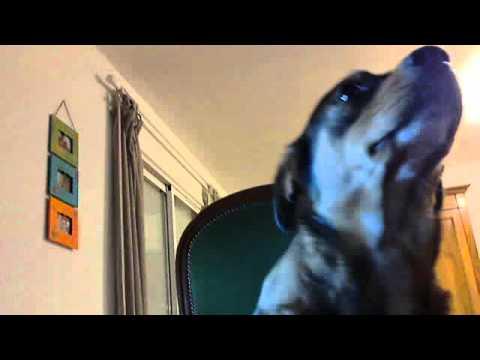 un chien qui regarde la tele tranquille sur son fauteuil youtube. Black Bedroom Furniture Sets. Home Design Ideas