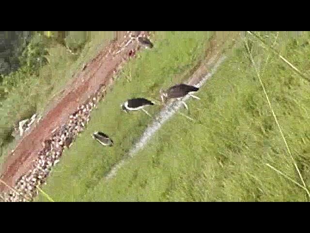 Birds of Uganda - Escape Tours and Safaris
