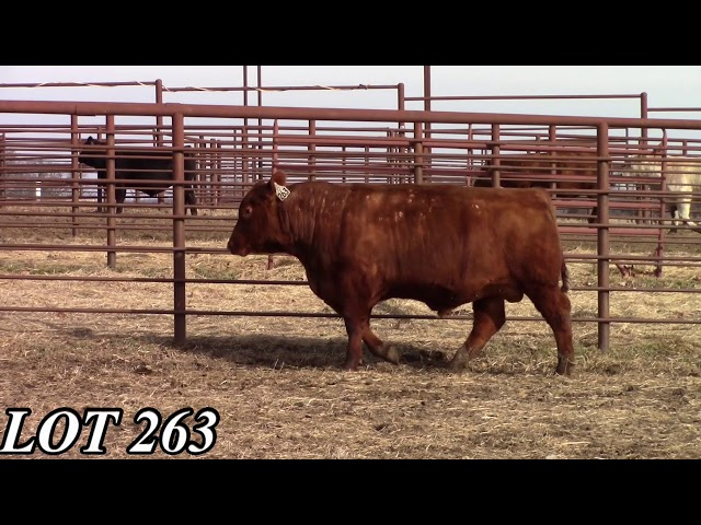 Mead Angus Farms Lot 263