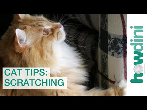 cat-scratch-tips:-how-to-stop-your-cat-from-scratching