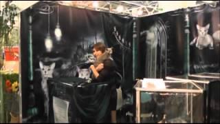 Стенд породы Русская голубая на выставке ИнфоКот 2012