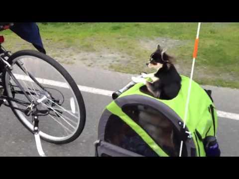 Dogs bike ride
