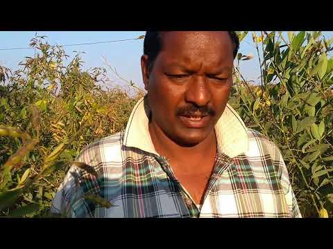 Niwas block farmer of Mandla Organic Krishak Producer company LTD
