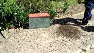 Retarded Swarm / Abscond