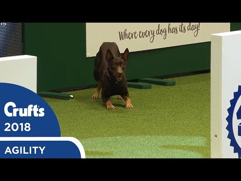 Agility - Crufts Singles Heat - S/M/L (Agility) Part 3 | Crufts 2018