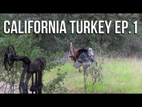 California Turkey Hunting EP1