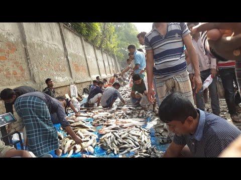 Wondrous Big Fish Market | Traditional Fish Market Dhaka Bangladesh 2017