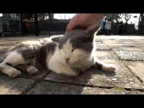Thumbnail for Cat Video I stroke the Enoshima cat.江ノ島の、「あのネコ」をなでる。