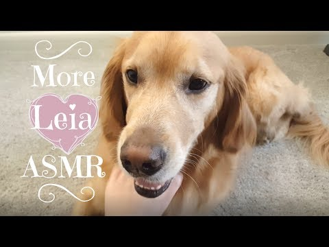 Doggy ASMR 🐾🐕 Leia the Golden Retriever