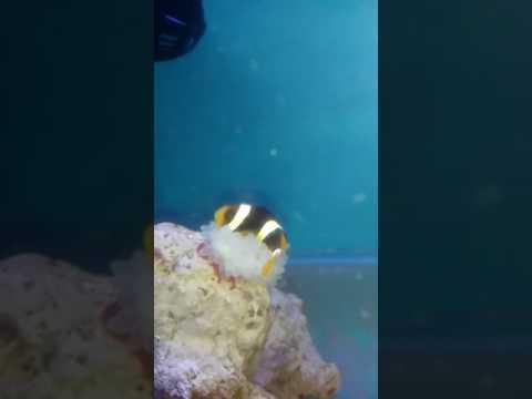 Homemade setup Marine aquarium