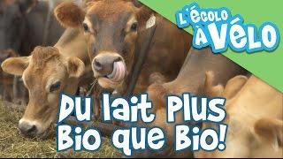 [L'Écolo à Vélo] Du lait plus bio que bio!