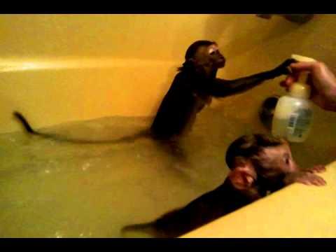 Monkey Baby Bath Tub