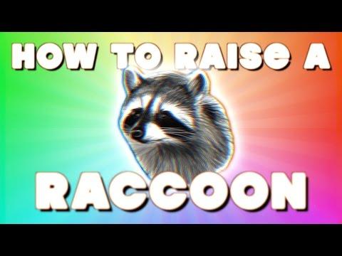 HOW TO RAISE A RACCOON