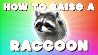 HOW TO RAISE A RACCOON