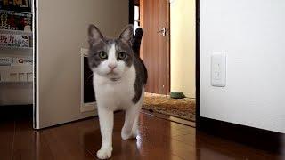 57 呼べば来るネコ   Cats Coming When Called