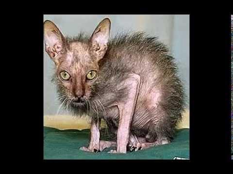 beautiful vs ugliest cat in the world - YouTube