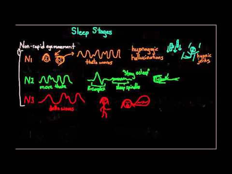 Chapter 13 part 2: The stages of sleep