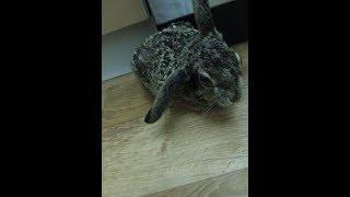 Заяц нападает на ребенка. Дикие животные. Смешные приколы заяц нападает. Заяц русак. Приколы. Зайчик
