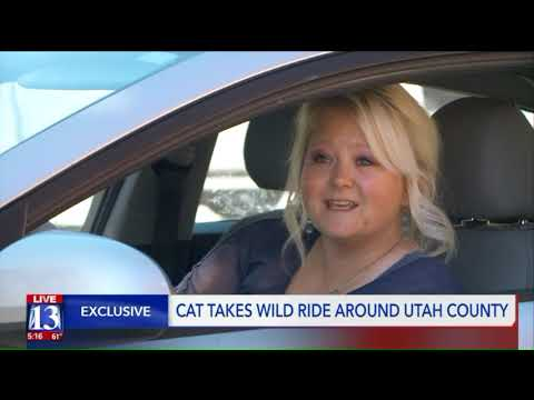 Cat Rides All Over Utah County Underneath Car