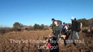 Beagle Scent Club Gauteng 2013