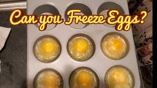 Can you Freeze Eggs?
