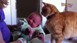 кошки и собаки впервые видят ребятишек