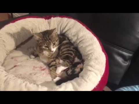 Cat give birth to kittens
