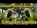 Melatih Mental Burung Cucak Hijau  Mp3 - Mp4 Download