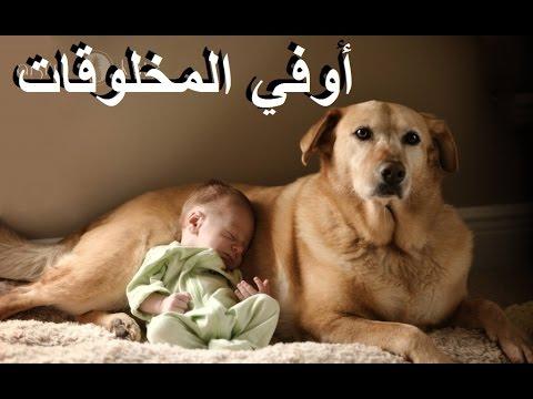 مضحك جداََ   الأطفال والكلاب   مواقف وطرائف
