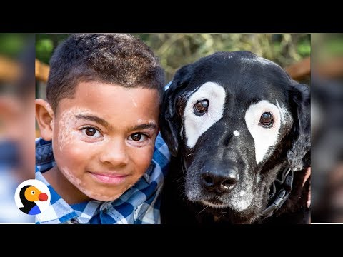 Boy and Dog with Vitiligo Meet for the First Time | The Dodo