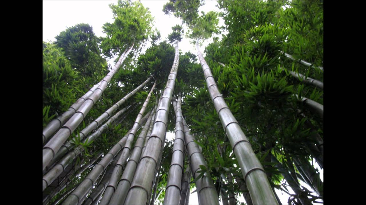 Les Brown Chinese Bamboo Tree Story Youtube