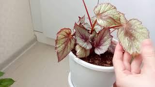 Комнатные растения Спасаю растения в подъезде