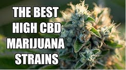 Top 5 High💪 CBD Strains / Low THC Marijuana Strain review🍃