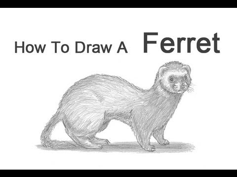 how to draw a ferret youtube
