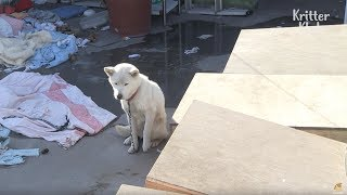 Dog Was Left Frozen And Not Taken Care Of | Animal in Crisis EP15