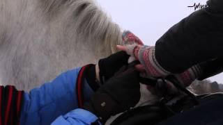 Кошкин дом. Конный спорт в Томске