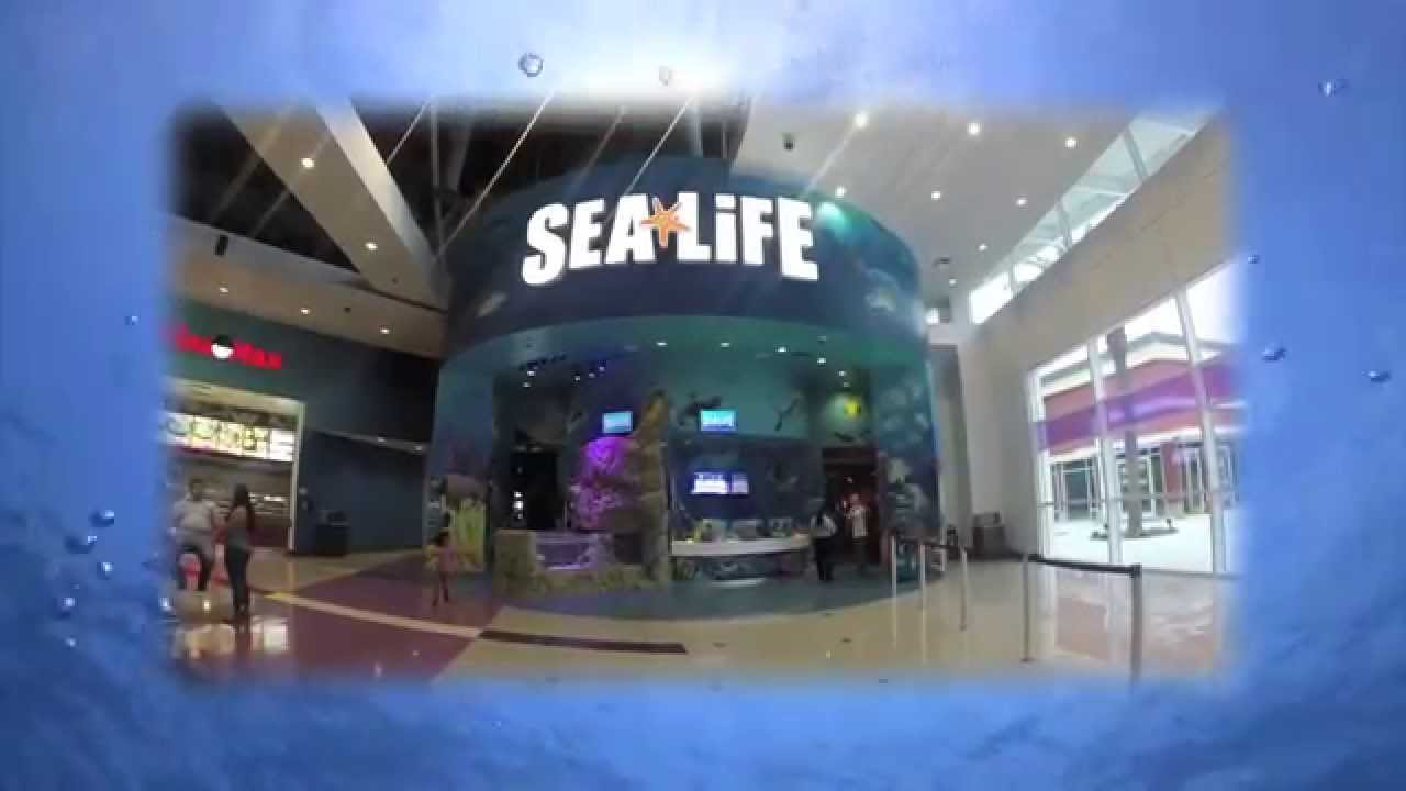 Sea Life Orlando Aquarium Visit Orlando Youtube