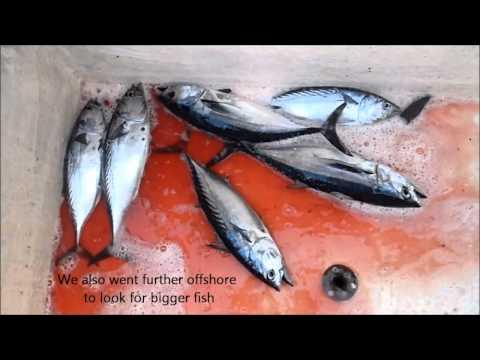Fishing Adventures #77 - Start of the Tuna Season in Fujairah