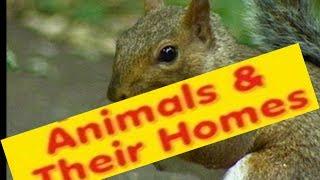 Animales en Casas de Nombres, Tipos - de la Lección para los Niños de jardín de infancia,Preescolar,Grado 1